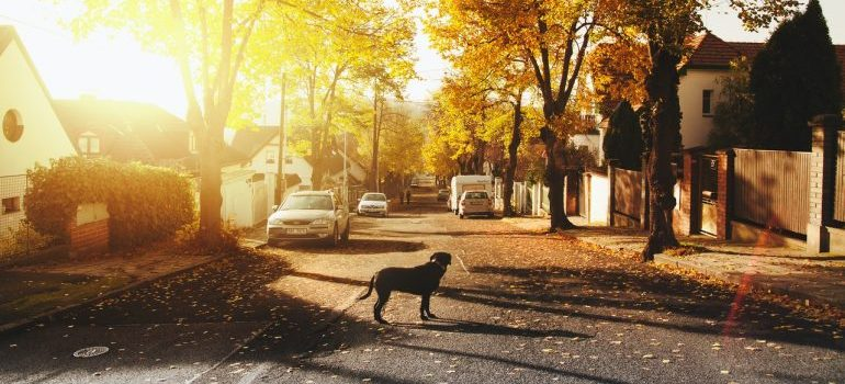 dog standing on the street